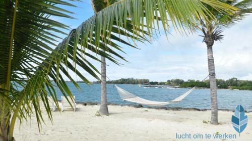 vakantiegevoel palmboom hangmat strand